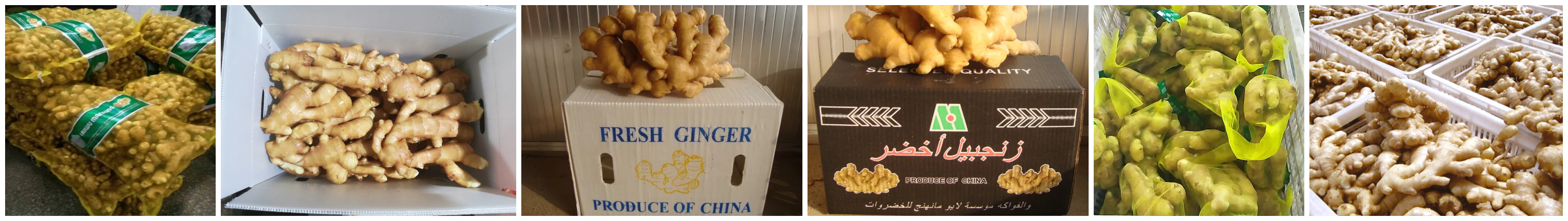 Ginger Packing