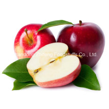 2015 New Fruit Fresh Gala Apple