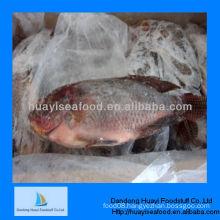 frozen fish frozen tilapia