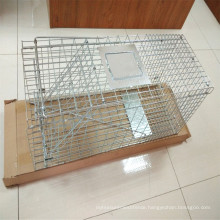 Foldable steel animal trap Fox cage trap