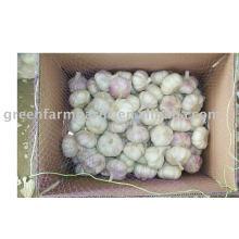 Ajo blanco normal de menor precio en jining greenfarm