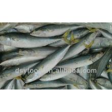 frozen mackerel 200-300g