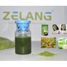 Fabricante Matcha Tea Private Label Matcha Polvo de Té Verde