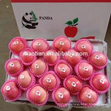 Yantai Fresh Sugar Apple for Sale