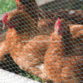 Small Hole Hexagonal Chicken Wire Mesh