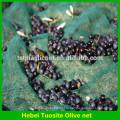 Оливковая сетка ,оливковый урожай сетка ,фруктов защитная сетка ,