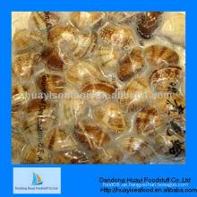 Gefrorene kurzhalsige Muschel