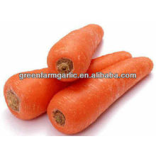 Shandong China tamaño zanahoria fresca 200-250g a Corea
