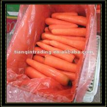 Low Price Red Carrot