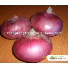 chinois oignon rouge frais le plus bas prix