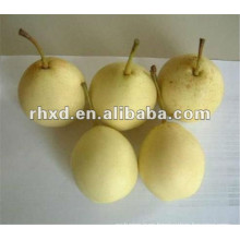 Hot selling delicious pear fruit export to India