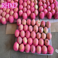 fresh fuji apple export countries chinese mature fuji apple