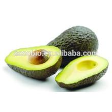 Melhor venda 100% extrato de Abacate Natural / Melhor preço Manteiga de frutas extarct pó 10: 1 / Persea americana extrato de óleos de abacate