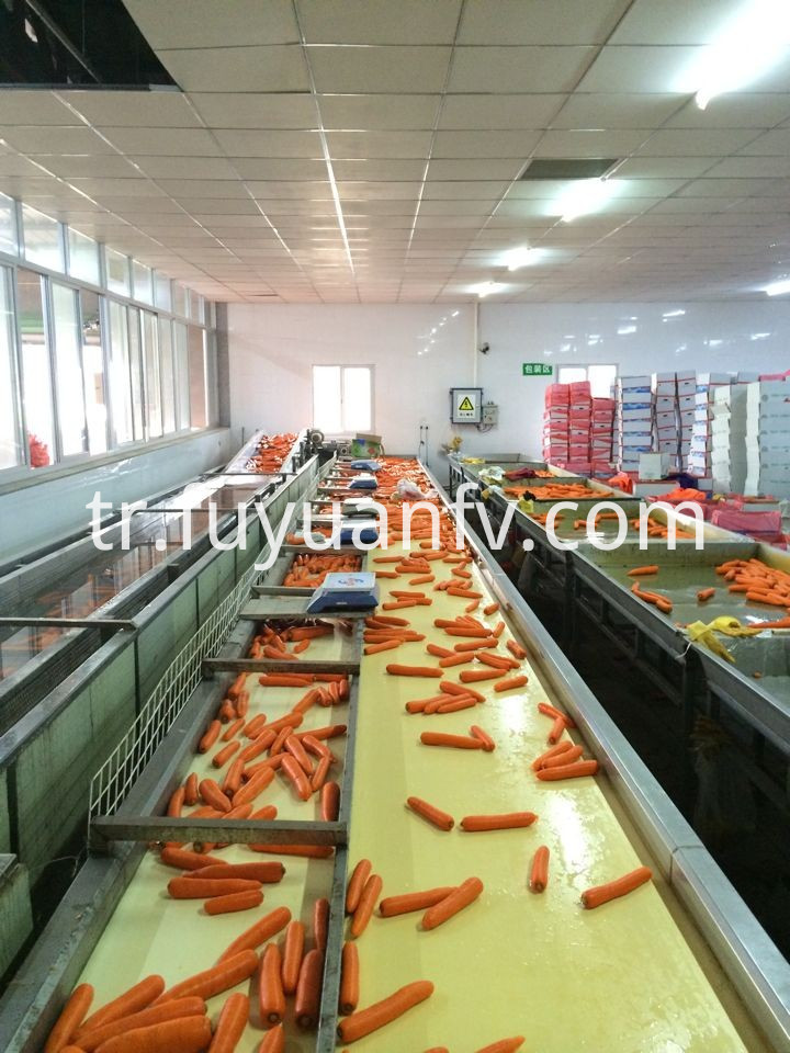 carrot factory