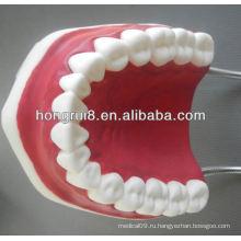 Новая модель медицинского стоматологического ухода, зубная пластиковая модель