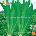 IL01 Wuban no.001 heat resistant Indianlettuce seeds