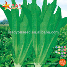 IL01 Wuban no.001 sementes de alface indianas resistentes ao calor