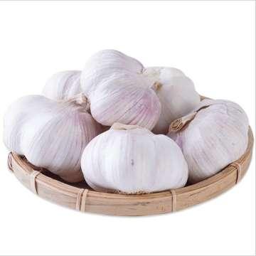 Verduras Frescas Precio Ajo Jengibre Cebolla