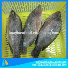 Tous les types de fournisseur de tilapia de poisson congelé