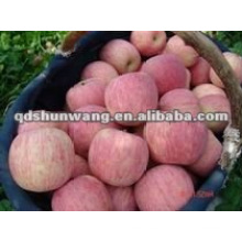 China fresca fuji manzana