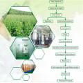 Extracto de hierbas Silymarin / extracto de cardo de leche en polvo ayuda a proteger el hígado y reduce la grasa en la sangre