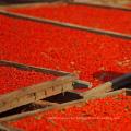 El más grande salvaje chino wolfberry Top Goji Berries orgánico certificado comida verde