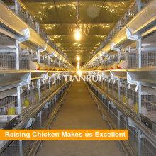 Projeto de Tianrui que vende a gaiola da camada da galinha para a galinha pequena