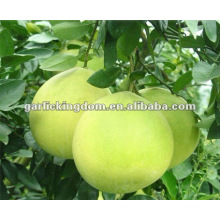 Honey Pomelo de Pinghe Chine (Agrumes)