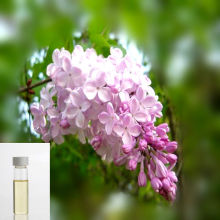 Superior Quality Clove leaf essential oil price