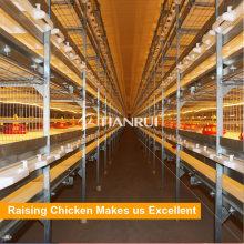 Cages de type H de poulet de contrôle de qualité à vendre