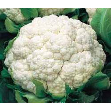 2013 cauliflower
