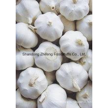 2016 Fresh Normal White Garlic