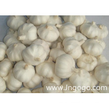 New Crop Fresh Good Quality Chinese White Garlic
