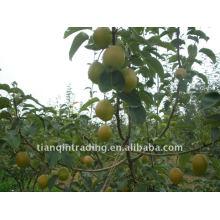 fresh fragrant pear