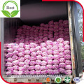 Big Size Fresh Purple Red White Garlic From China