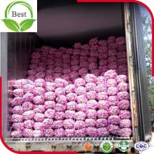 Grande taille d'ail blanc rouge et violet frais en provenance de Chine