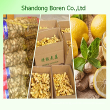 2015 Chinese Fresh Ginger Wholesale