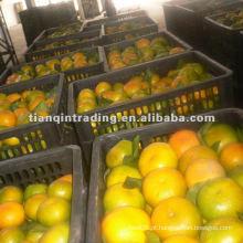 2012 nova colheita mandarina Orange