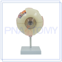 PNT-0660 high quality Human Eyes Anatomy Model Customized