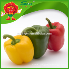 High quality green peppers frozen color capsicum supplier