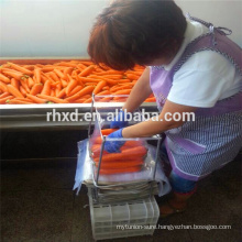 New crop best price fresh carrot China