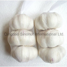Pure White Garlic, Normal White Garlic of Hot Sale