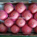 Apple Fruits-Stripe