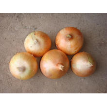 5-8cm Yellow Onion for Exporting