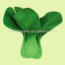 JPK01 Baicai High quality of chinese Pakchoi seeds for vegetable seeds