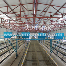 Layer Cage System in Chicken