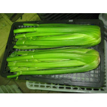 verduras nutritivas IQF apio fresco