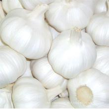 Ail blanc pur et frais