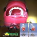 Продать 12559 присоски типа Фантом медицинской науки образовательный стоматологический обучения