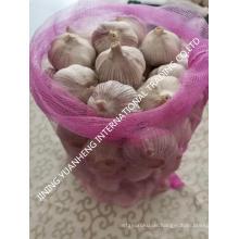 Hochwertiger frischer Knoblauch weißer Knoblauch